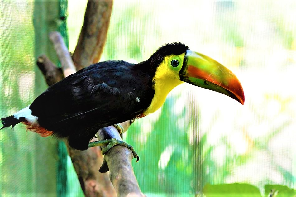 Toucan rescue sanctuary, Costa Rica