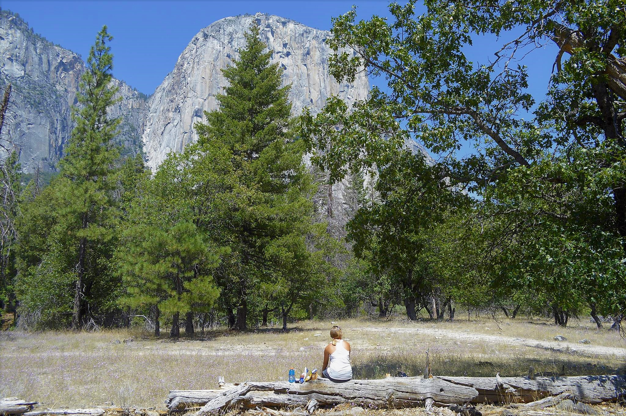 Picture of El Capitan Yosemite National Park USA Road Trip