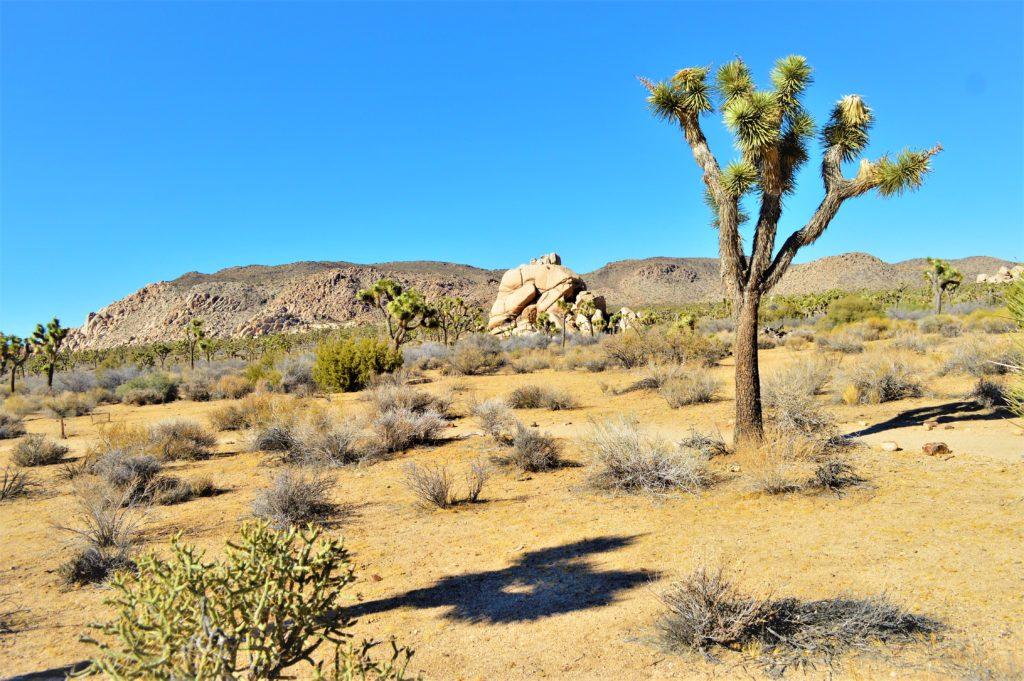Joshua Tree National Park terrain, California