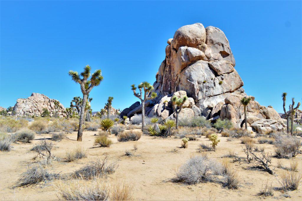 Rocks and trees, Joshua Tree National Park, California