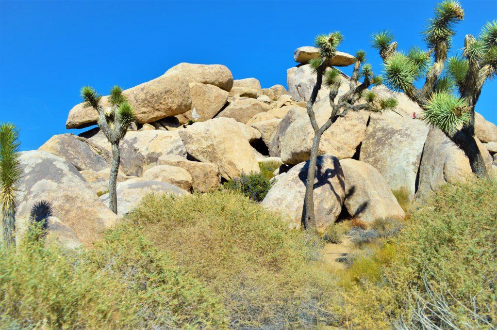 Rocks and trees, yucca, Joshua Tree National Park
