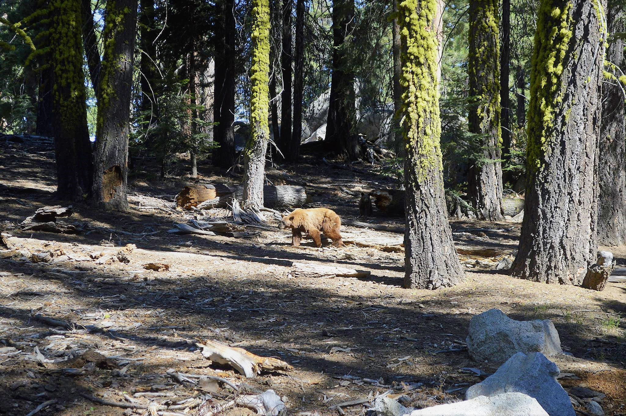 Picture of Sequoia National Park USA Road Trip
