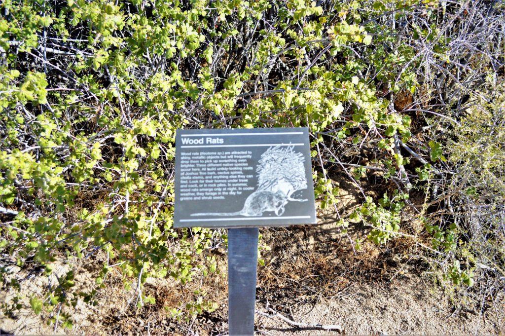 Wood rats sign, Joshua Tree National Park, California