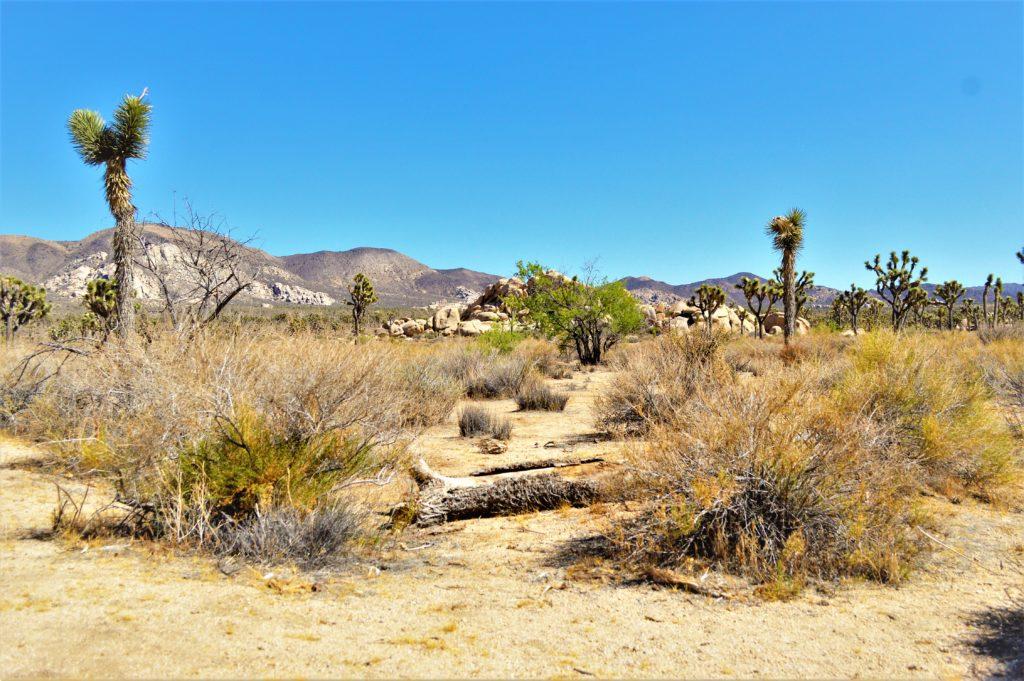 Desertscape, Joshua Tree National Park, California