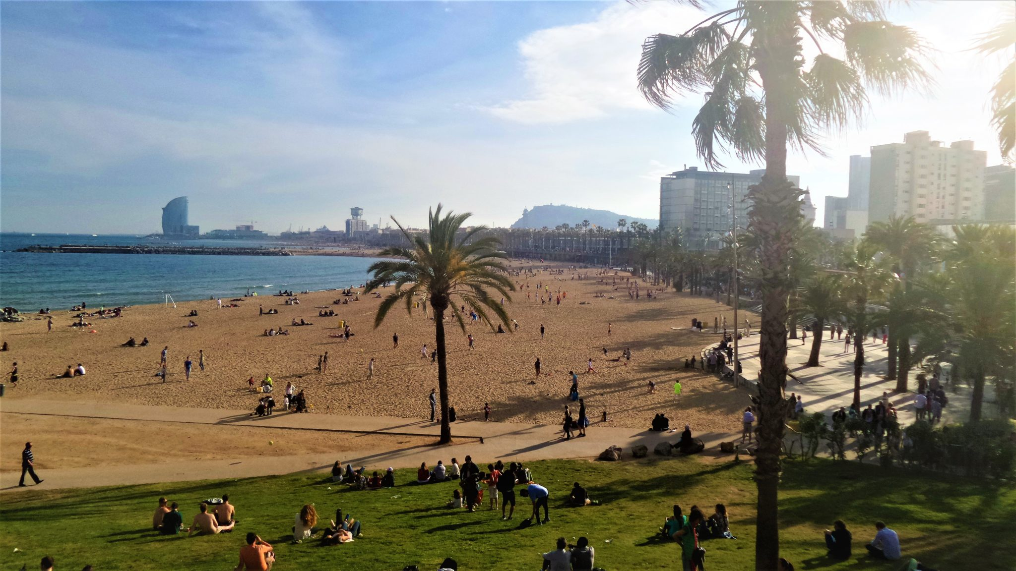 Barcelona Beach with palm trees, Spain