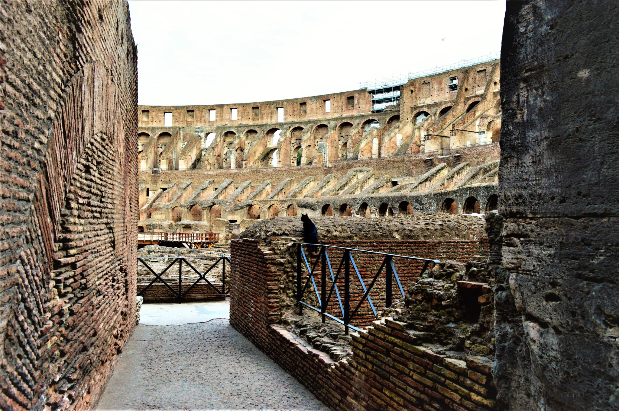 Cat inside the Colosseum, Rome, Italy
