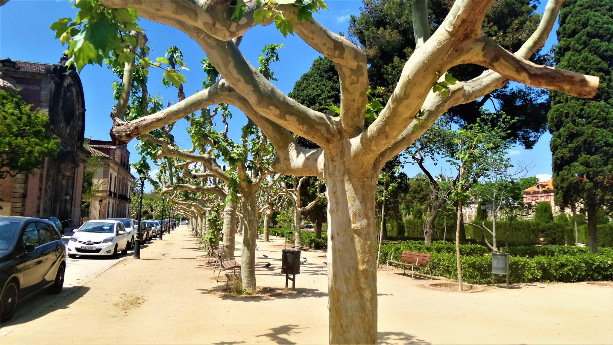 Ciutadella Park trees, Barcelona, Spain