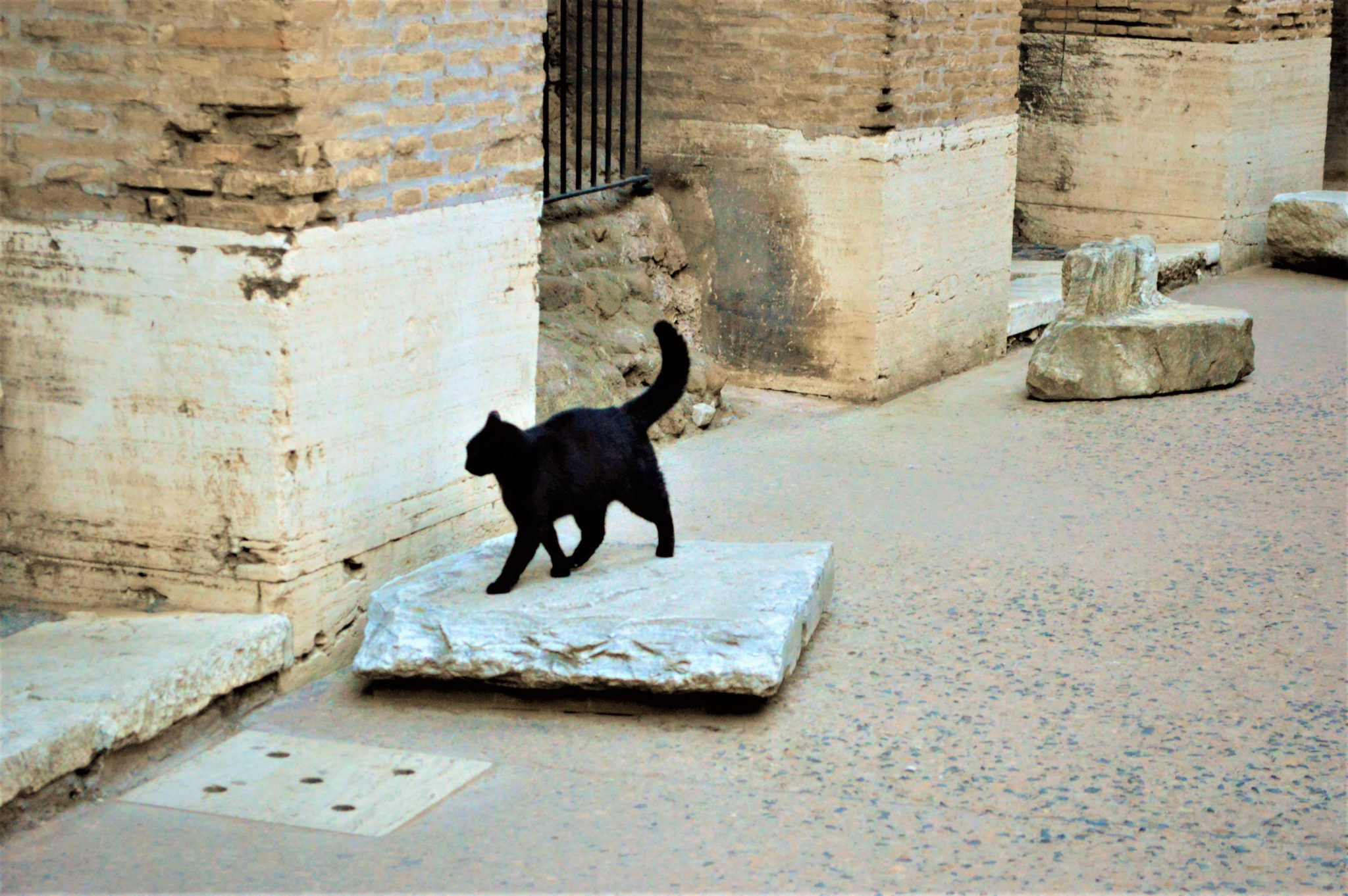 Resident cat inside the Colosseum, Rome, Italy
