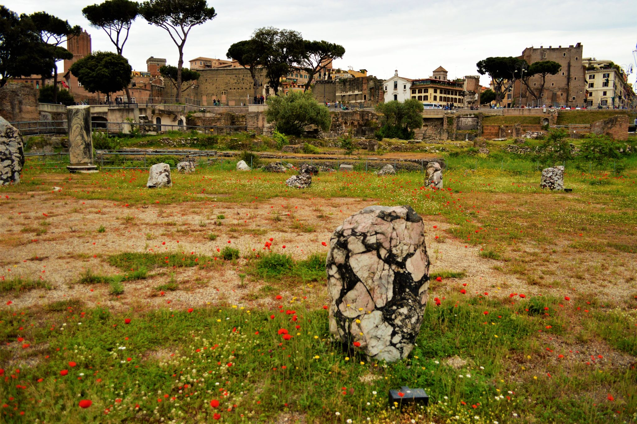 Flowers and ruins, Roman Forum, things to do in Rome, Italy