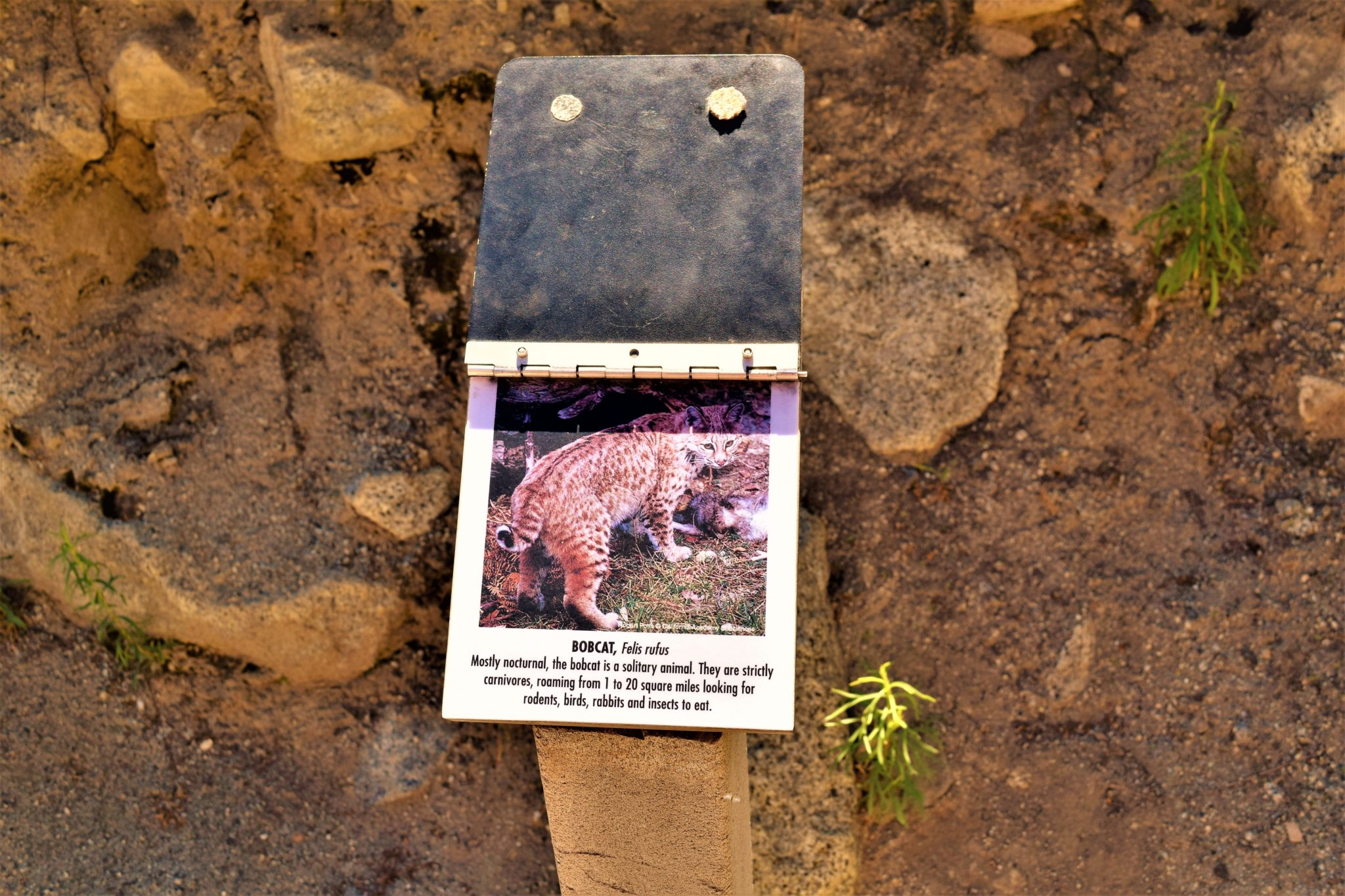 Bobcat information cards, Palm Springs tramway, California