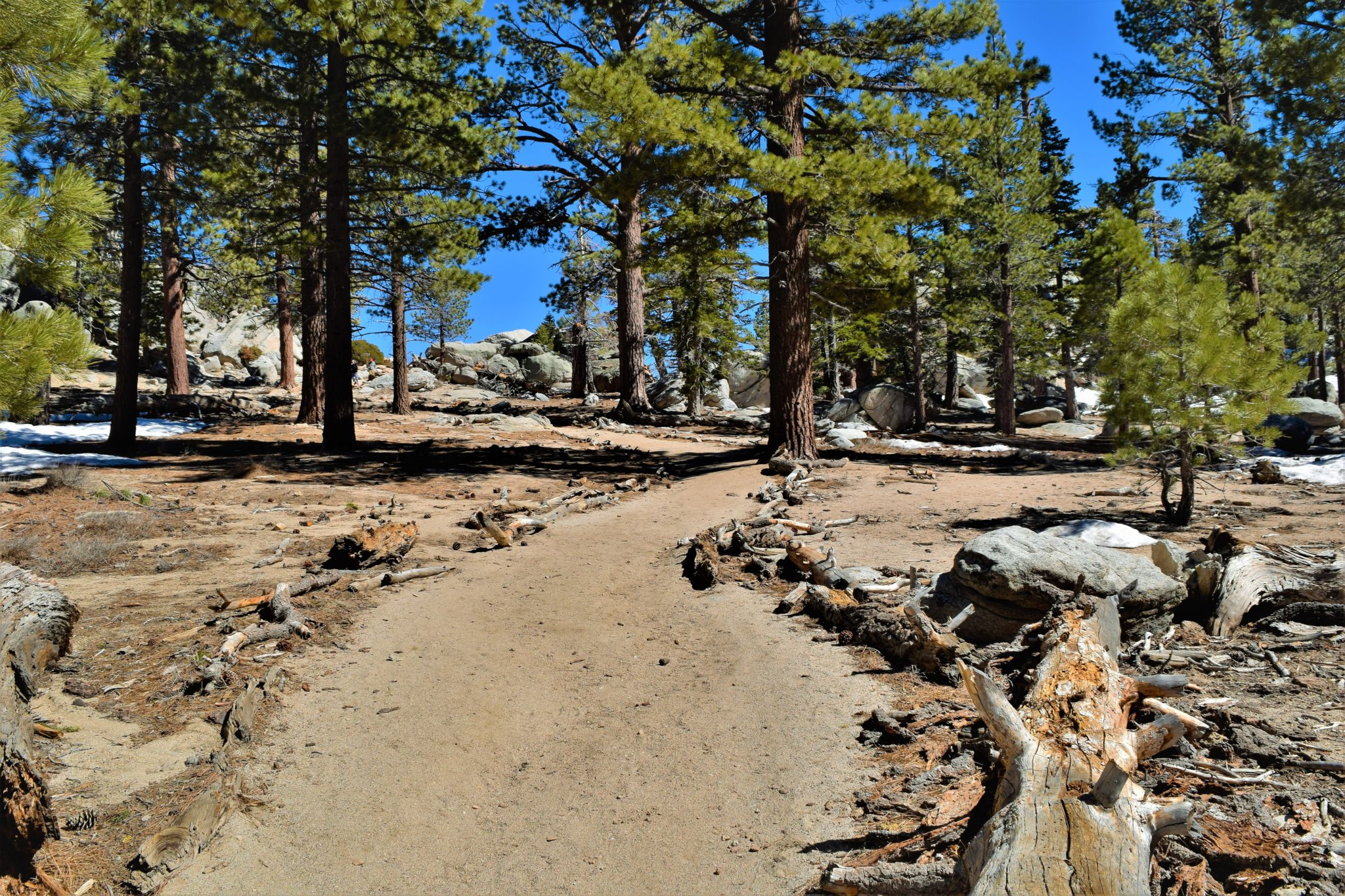 Hiking trail san jacinto state park palm springs california