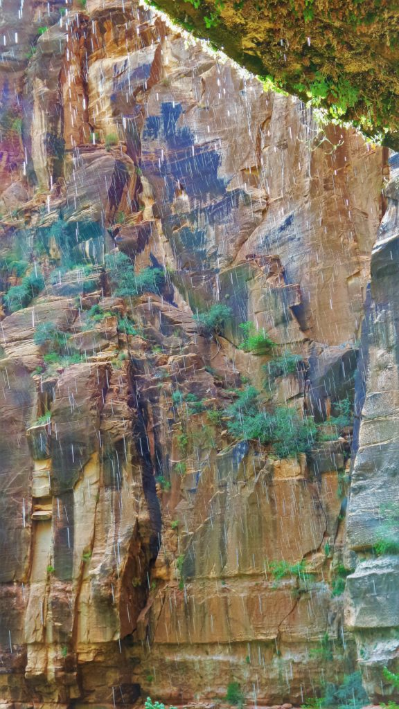Beneath the weeping rock in Zion National Park, Utah