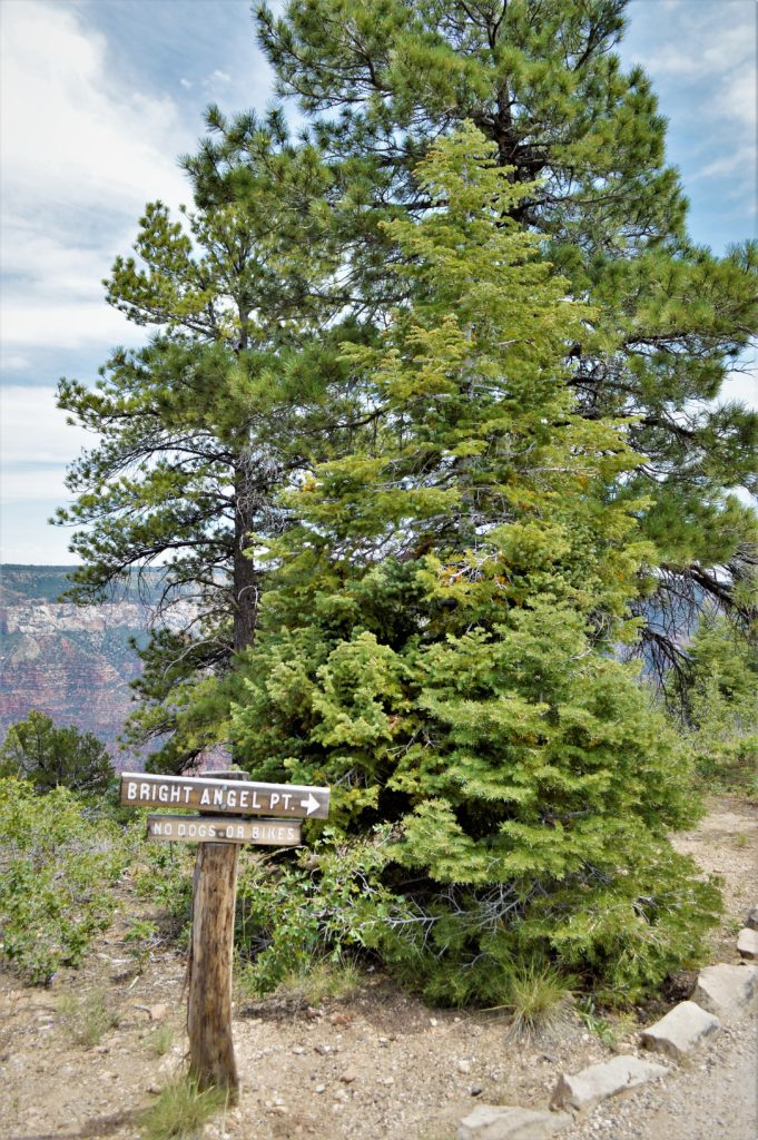 Bright Angel Point, Grand Canyon North Rim