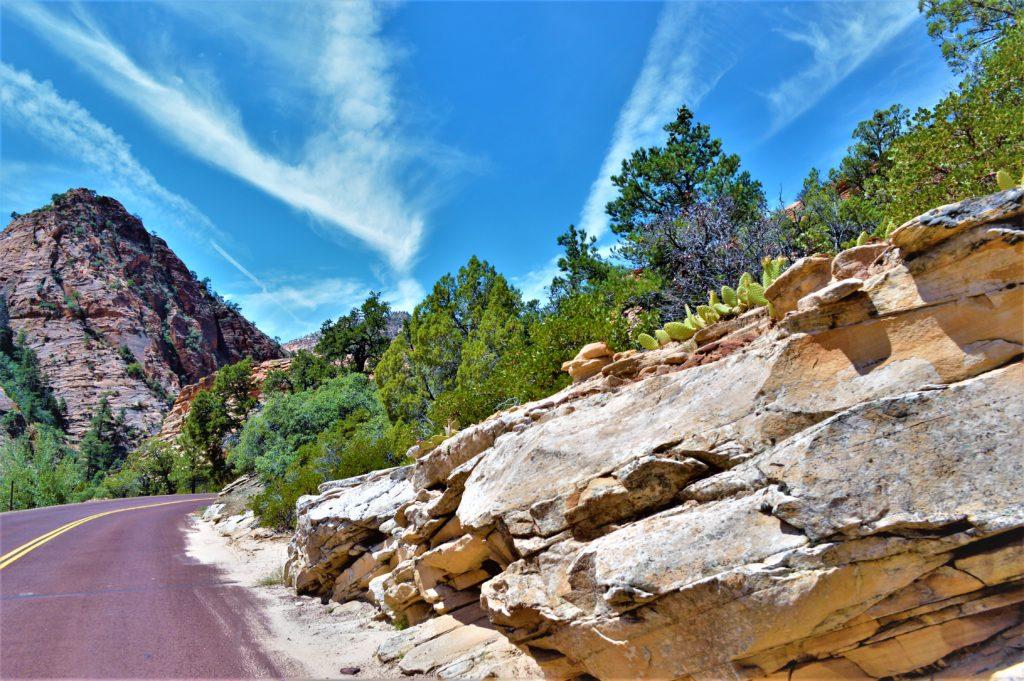 Cacti in Zion National Park, Utah