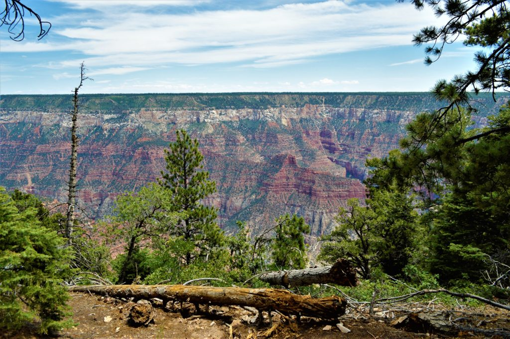 Grand Canyon North Rim, view of the Grand Canyon