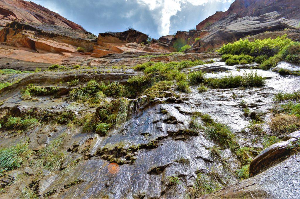 Weeping rocks on the riverside walk zion narrows hike