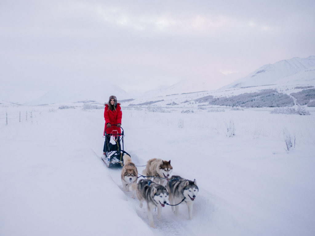Top things to do in Iceland - Huskies Sled Iceland