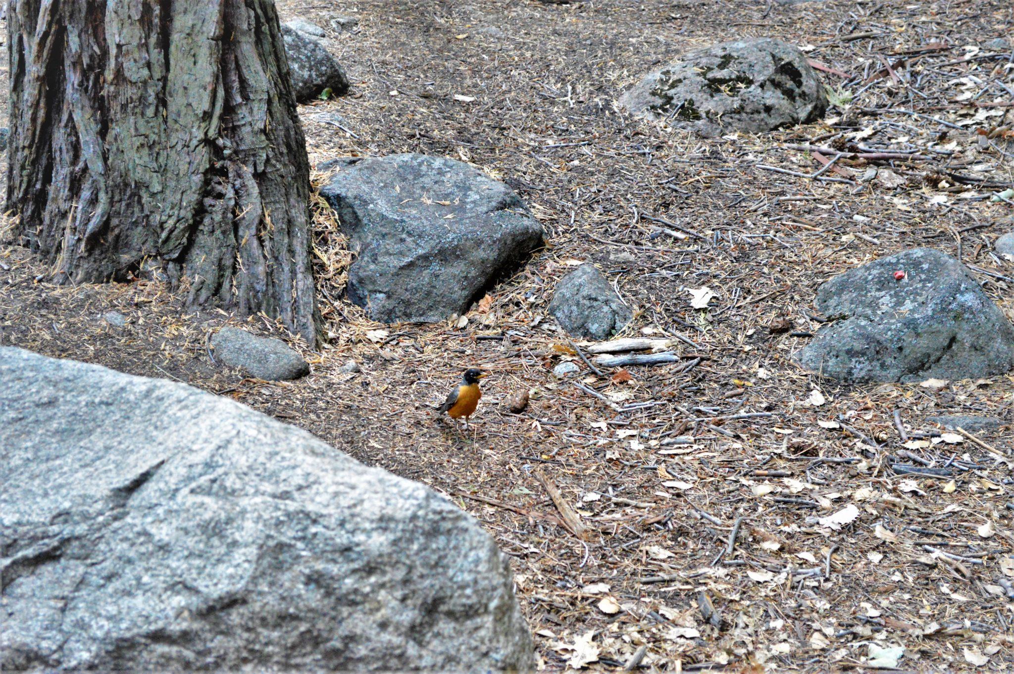 Bird at Yosemite National Park, California, things to do at yosemite