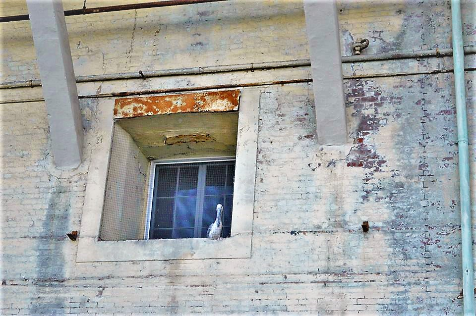 Bird in window, Alcatraz prison, San Francisco, California