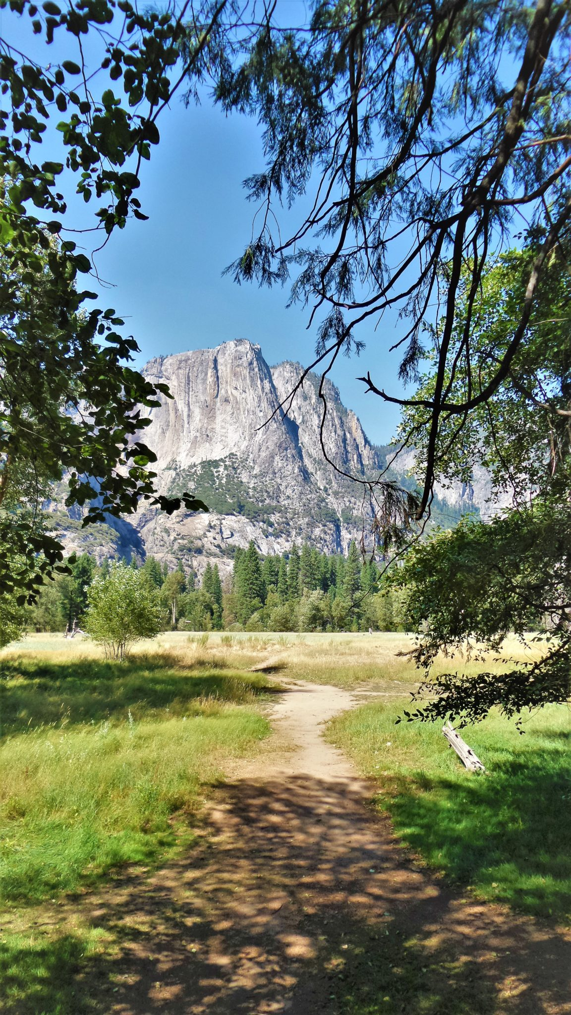 Cliff view through trees, Yosemite National Park, California