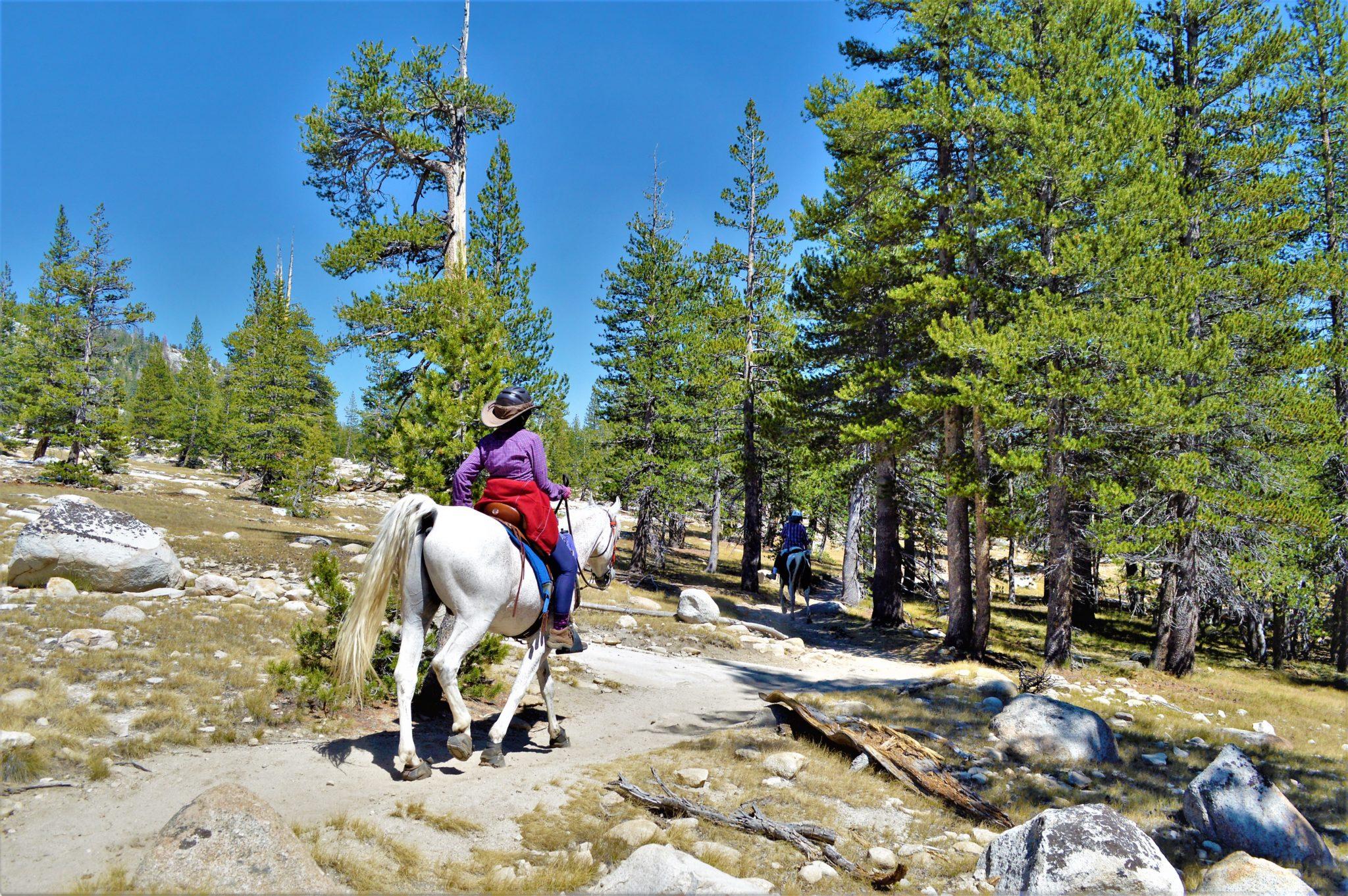 Horse back riders, PCT Yosemite National Park, California#