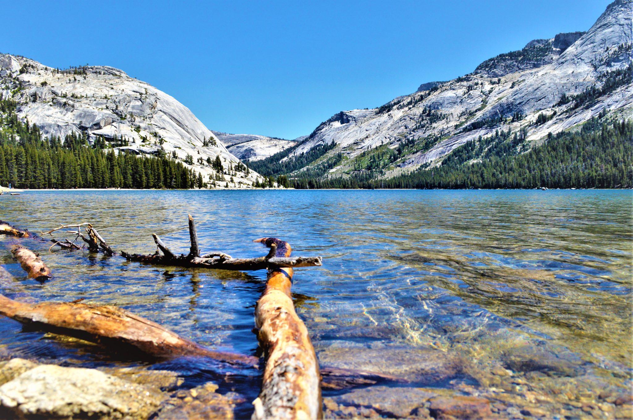 Logs in lake at Yosemite, California