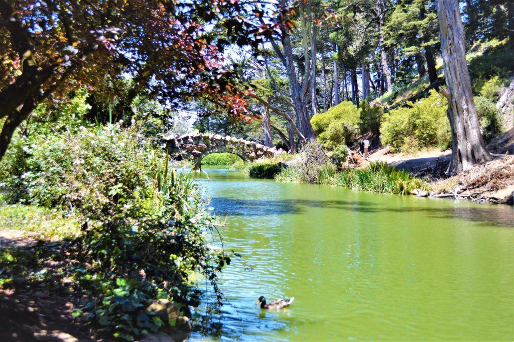 Pond in Golden gate Park, San Francisco, USA