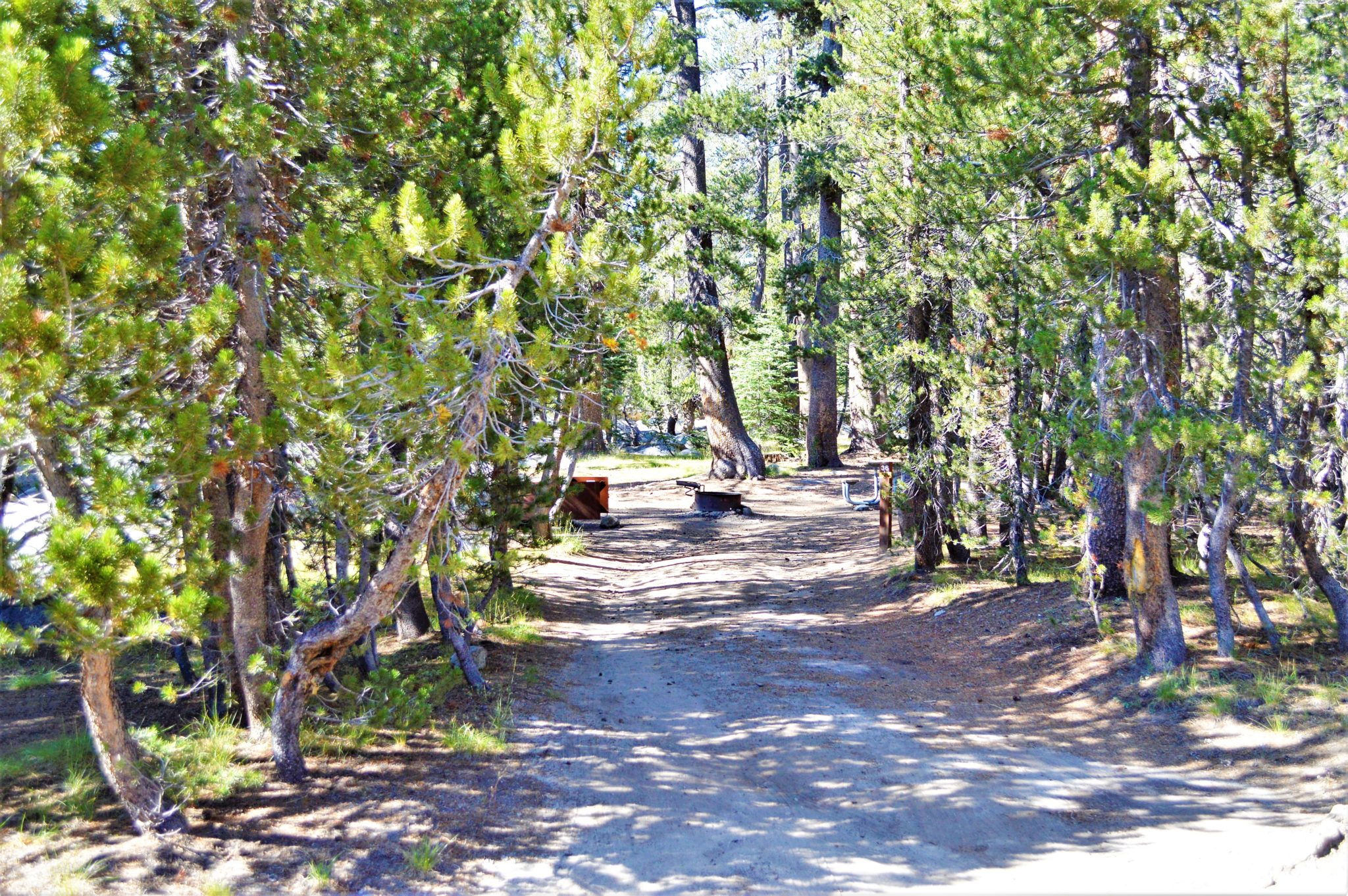 Porcupine Flat camping spot, Yosemite, California
