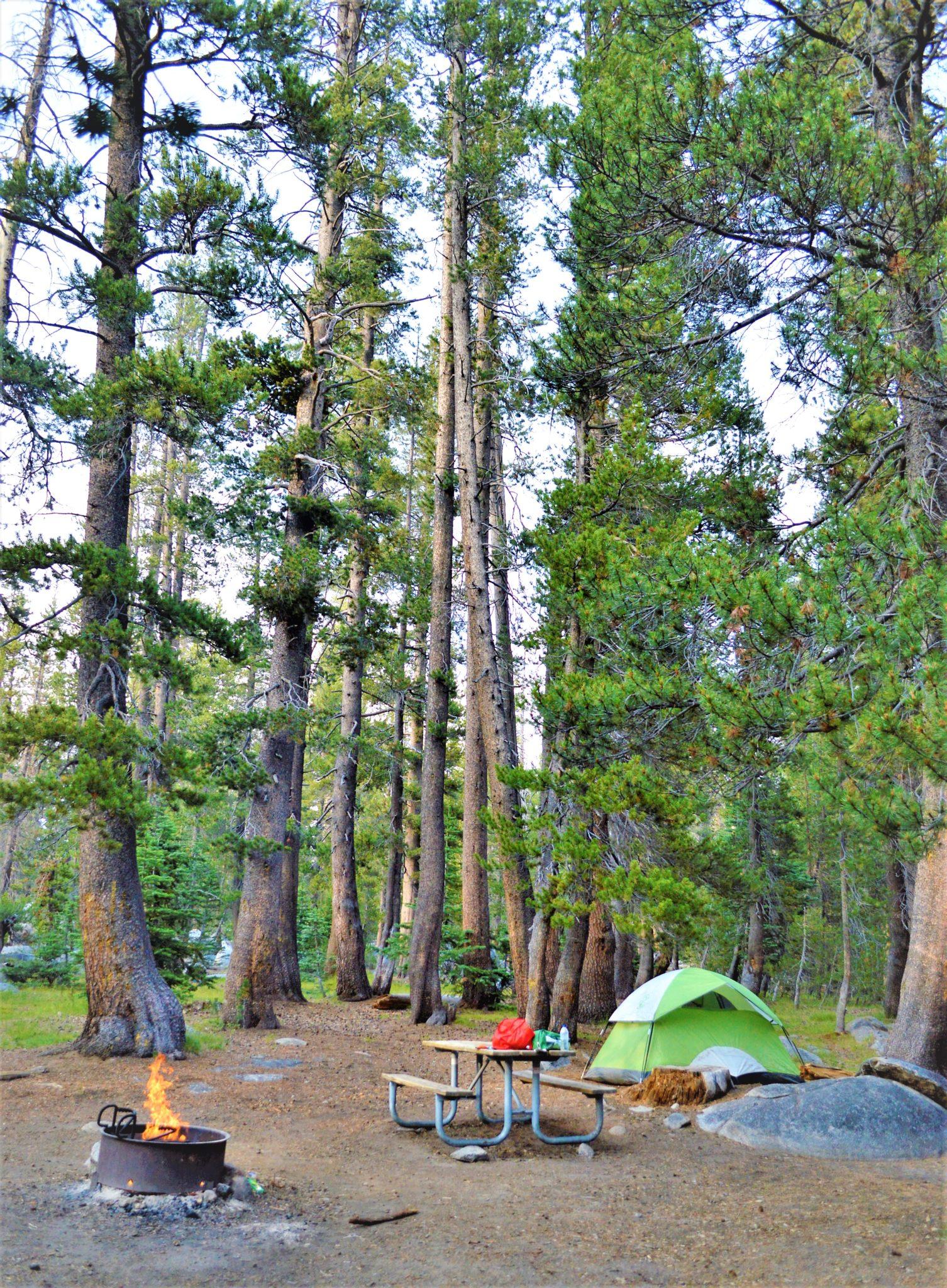 Porcupine Flats Camping at Yosemite National Park, California
