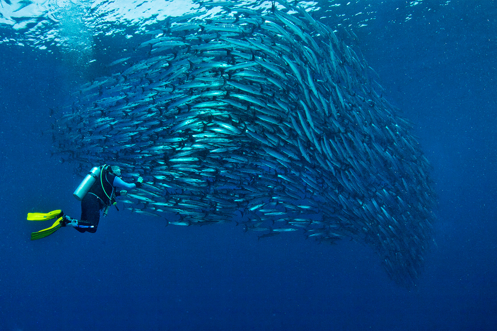 Best diving sites in the world, BARRACUDA POINT