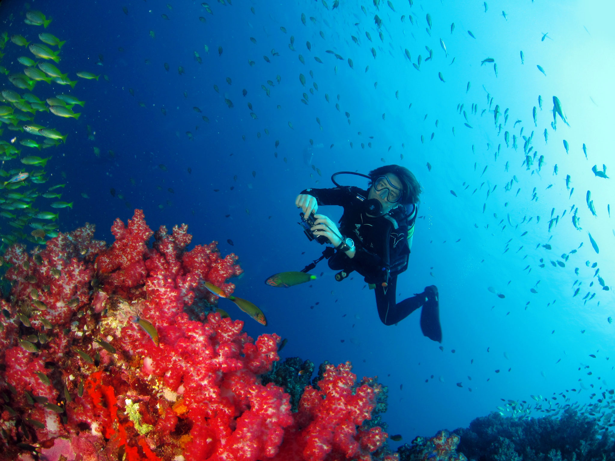 RICHELIEU ROCK, Best diving sites in the world