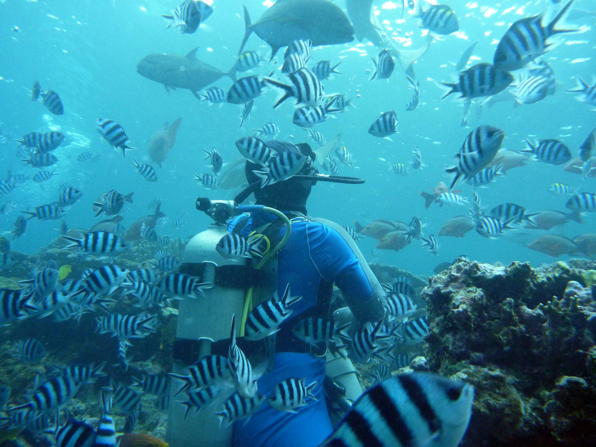 SOMOSOMO STRAIT, Best diving sites in the world