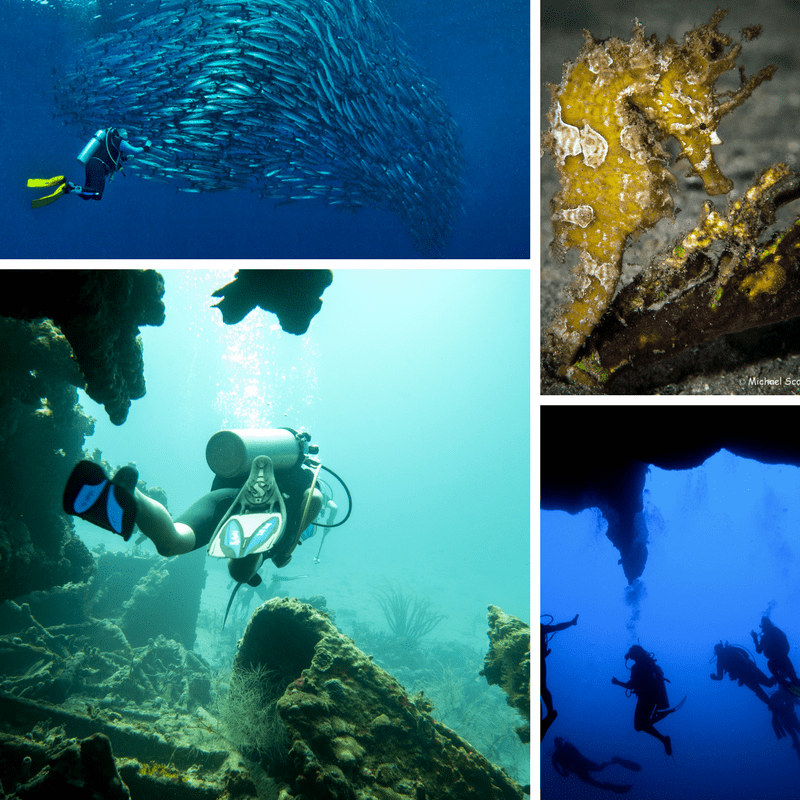 The world's best sites for diving
