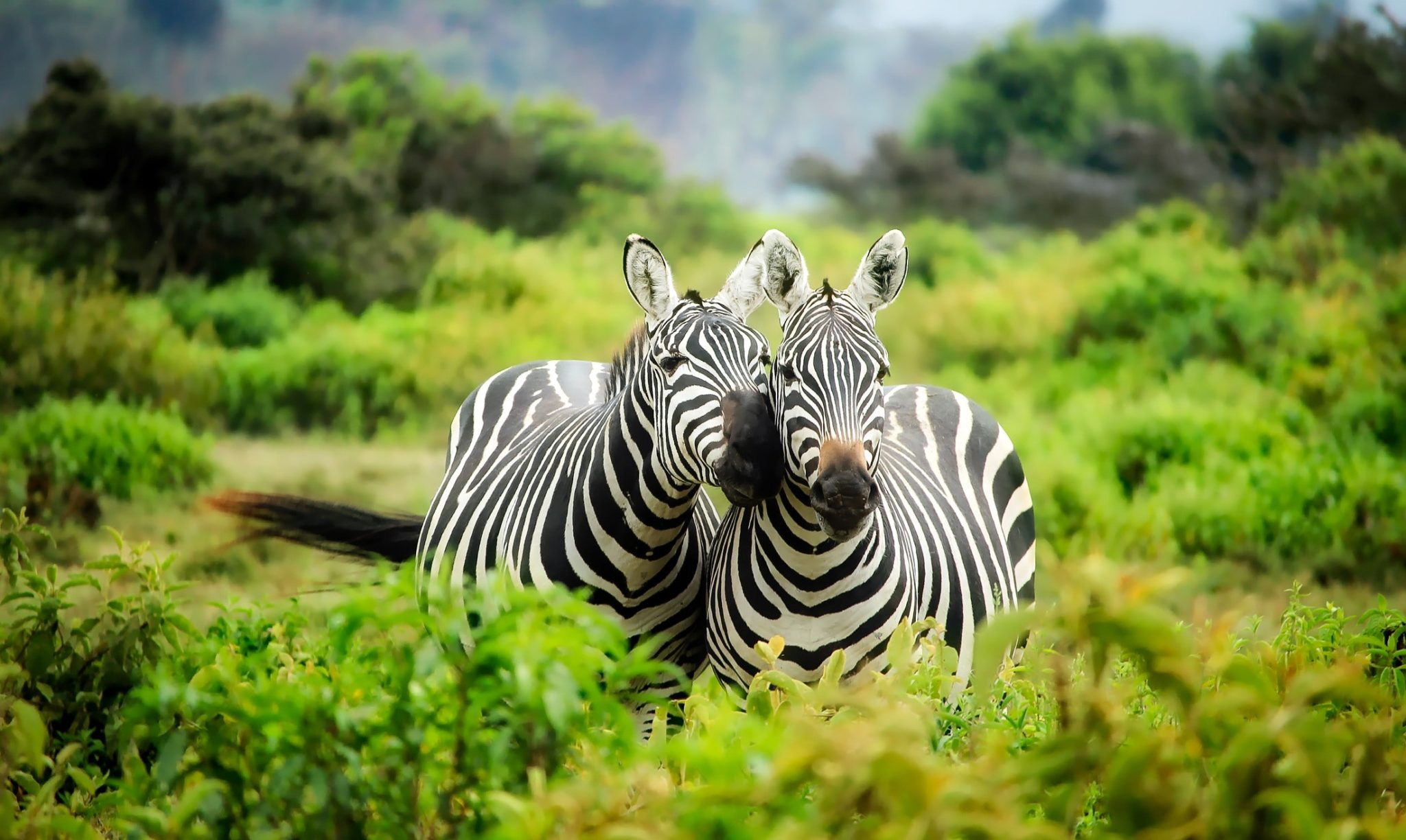 Reasons to travel to Africa, animals conservation