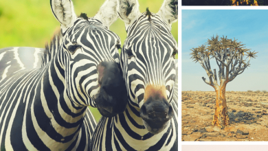Why you should travel to africa this year