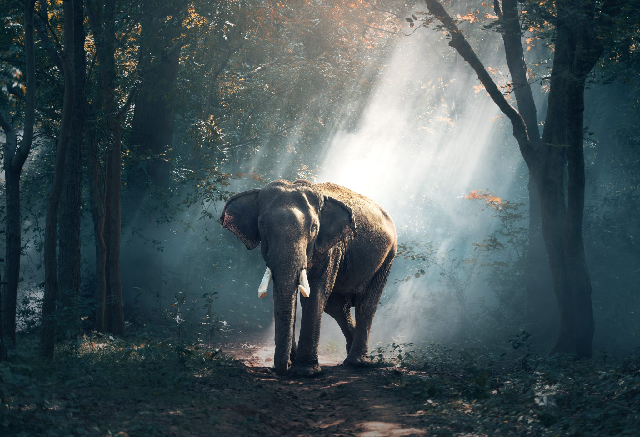 Elephant, travel to Asia